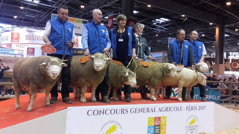 Concours mouton Ile de France